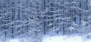 cropped-winter_header-1.jpg