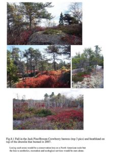 Ecological Assessment of Plant Communities ImageLarge