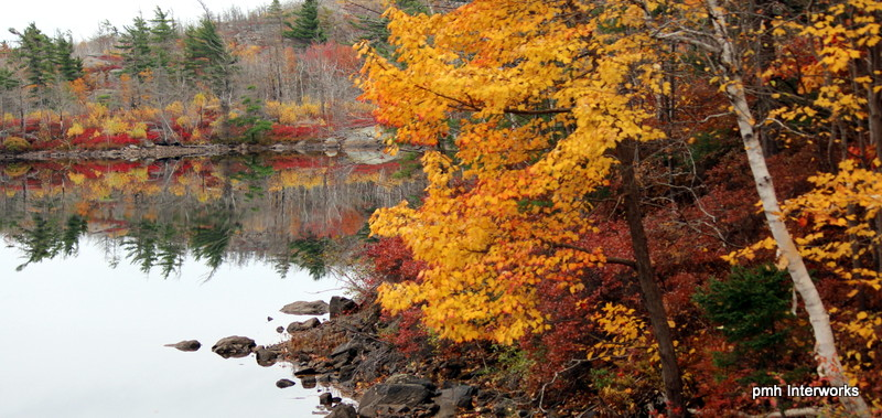 autumn lake with trees