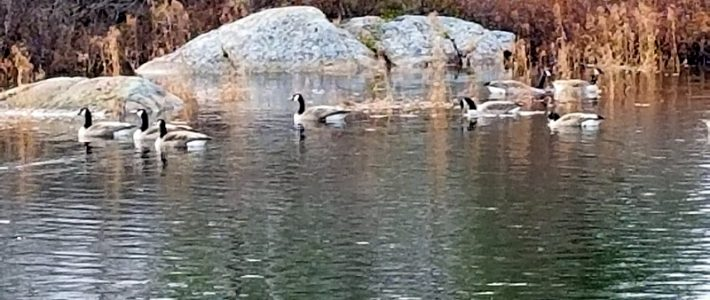 Late Fall Visitors to Williams Lake