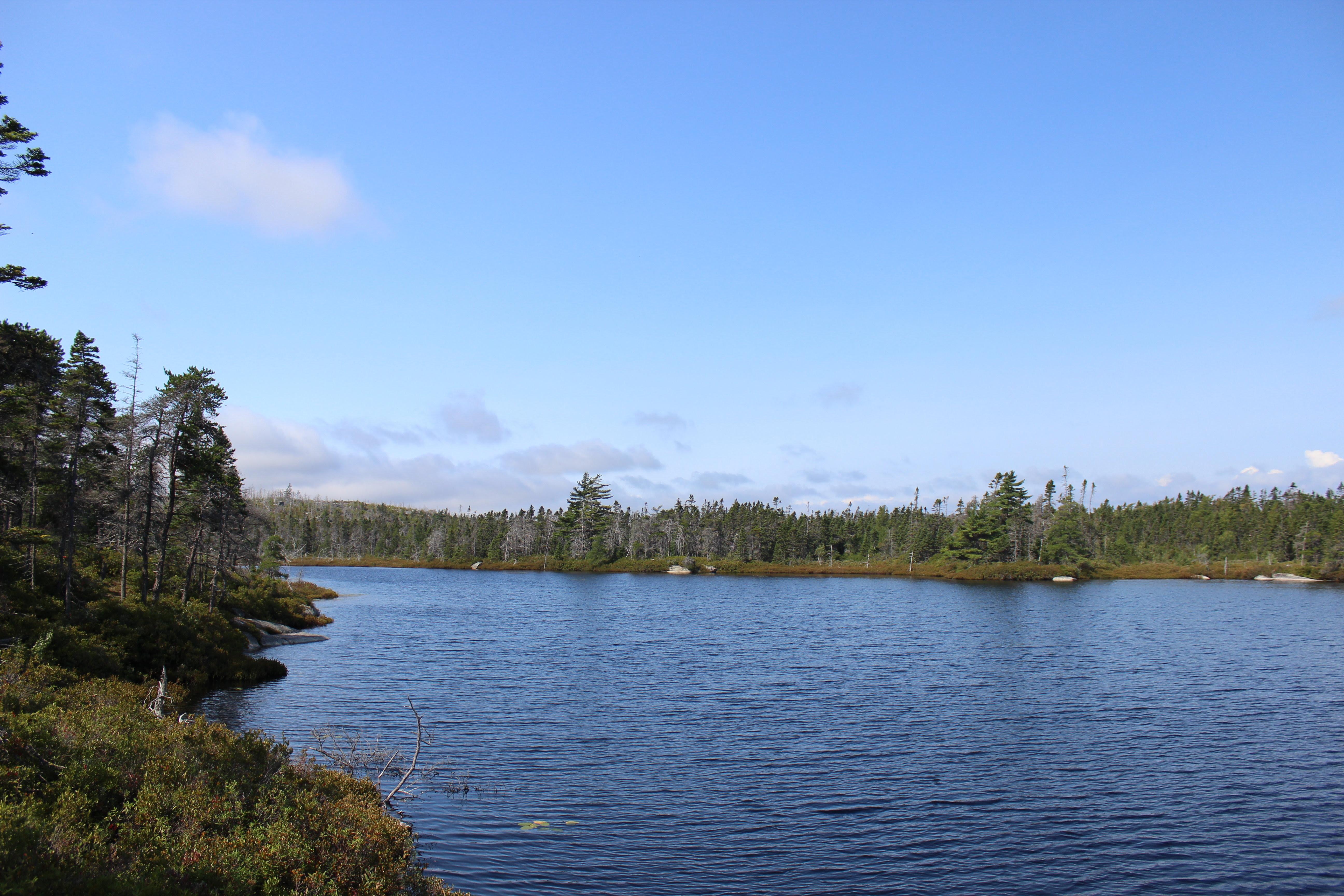 Chances Williams Lake